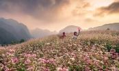 Hà Giang: Đẹp ngỡ ngàng mùa hoa tam giác mạch
