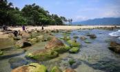Đà Nẵng: Du lịch trải nghiệm bình minh trên vịnh Nam Ô bằng thuyền thúng