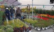 Đà Nẵng: Chợ hoa Tết nhộn nhịp cảnh mua bán ngày cận Tết Nguyên đán