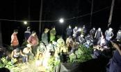 Quảng Nam: 41 đối tượng rủ nhau vào rừng thông đánh bạc trong cao điểm dịch Covid-19