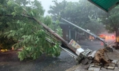 Đà Nẵng: Mất điện, gẫy đổ cây xanh, cột điện do bão số 5 tiến vào bờ