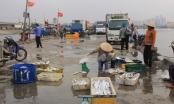 Đà Nẵng: Dừng hoạt động Cảng cá Thọ Quang từ trưa ngày 26/7