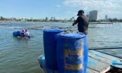 Đà Nẵng: Hỗ trợ tiêu thụ hải sản sống do bị ảnh hưởng bởi dịch Covid-19