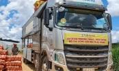 Đà Nẵng: Lên kế hoạch phân bổ 1.000 tấn rau củ, quả cho các quận huyện