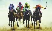 Trường đua ngựa: Dự án kinh doanh đặt cược