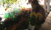 Dân đổ xô lấy hoa trong đêm thu dọn đường hoa Nguyễn Huệ 