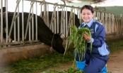 Rời công sở, về quê nuôi bò thu nhập gần chục tỷ đồng mỗi năm