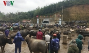 Độc đáo phiên chợ trâu lớn nhất miền Bắc
