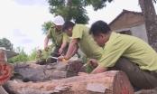 Vụ trùm gỗ lậu Phượng râu: Chưa phát hiện công an vi phạm