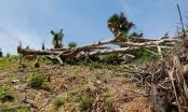 Nghệ An: Phá rừng ở Quỳ Châu đến mức báo động