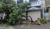 Hải Dương: Nhiều phố ngập sâu, cây đổ hàng loạt do mưa lớn