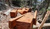 """Quảng Nam: Hàng loạt khu rừng bị """"xẻ thịt"""""""