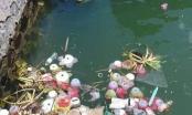 Thực hư chuyện thả 3 vạn hoa đăng nhựa xuống biển để 'bảo vệ môi trường'