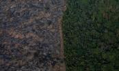 """Ám ảnh """"nghĩa địa chết chóc do thảm họa cháy rừng Amazon gây ra"""