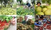 Xây dựng thương hiệu trái cây Việt cho thị trường toàn cầu