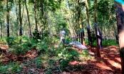 Thiếu nữ nghi bị hiếp dâm, sát hại trong rừng cao su