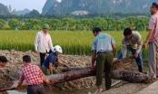 Phát hiện cọc gỗ nghìn năm tuổi bên sông Bạch Đằng