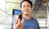 Trại côn trùng có mùi thơm ở miền Tây: Nhàn nhã mà thu tiền khủng