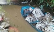 Công ty nước sạch sông Đà phát hiện nước có váng dầu, 5 ngày sau mới báo cáo Sở Xây dựng