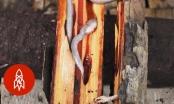 """Ăn sống sâu gỗ nhầy nhụa – món đặc sản xếp hạng kinh dị"""""""