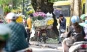 Dạo quanh Hà Nội ngắm họa mi dịu dàng xuống phố