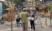 Chợ hoa Hà Nội vào vụ Tết