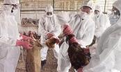 Bùng phát dịch cúm gia cầm H5N1 tại tỉnh Hồ Nam, Trung Quốc