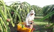 Dịch bệnh Virus Corona: Bộ Nông nghiệp họp khẩn về xuất khẩu nông sản sang Trung Quốc