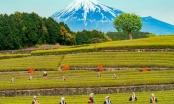 Khám phá vẻ đẹp nên thơ của Shizouka- quê hương núi Phú Sĩ