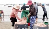 Nhộn nhịp chợ 'lộc biển'