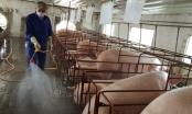 Chính phủ yêu cầu 3 Bộ kiểm soát giá lợn