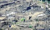 Từ vụ bắt nguyên phó tư lệnh DN quân đội: 'Khai tử' hàng trăm ha rừng tự nhiên