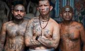 Bí mật về MS-13 – băng đảng tội phạm khiếp sợ nhất Bắc Mỹ