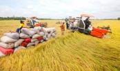 Vượt biến động tăng giá bất ngờ, thế mạnh Việt Nam tính thu 3 tỷ USD
