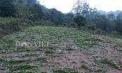Mộc Châu: Xảy ra mưa đá kèm dông lốc gây thiệt hại 12 tỷ đồng