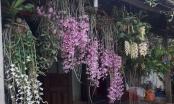 Bộ sưu tập lan rừng quý hiếm của trai 9X tỉnh Đắk Nông