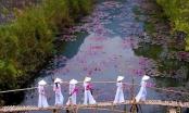 Ảnh: Suối Yến của Việt Nam đạt giải nhất cuộc thi Nhiếp ảnh mùa xuân 2020