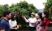 Vải thiều Việt Nam dự kiến sang Nhật trong tháng 6 này