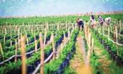 HAGL Agrico (HNG) không ngại gia tăng vay nợ