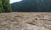 Kinh hoàng cảnh hồ thủy điện Sông Tranh 2 dày đặc gỗ, cây rừng sau mưa lũ