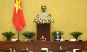 Hôm nay, Quốc hội quyết việc bỏ HĐND quận, phường ở TP HCM