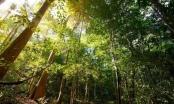 3 dự án chuyển đổi rừng tự nhiên bị từ chối