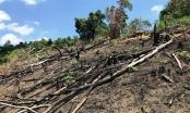 Bình Định: Bỏ phiếu kín, 100% đồng ý... không kỷ luật cán bộ để mất rừng (!?)