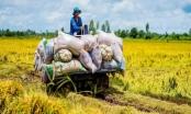 Tin kinh tế 6AM: Kỳ tích tăng trưởng GDP; Xuất nhập khẩu Việt Nam 2020 vượt khó ấn tượng