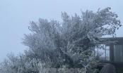 Lạng Sơn: Băng tuyết phủ trắng đỉnh Mẫu Sơn
