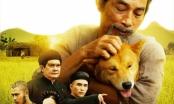'Tẩy chay' phim Cậu Vàng vì con chó: Đừng mạo hiểm với vấn đề nhạy cảm