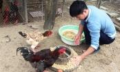 Vật nuôi đặc sản đắt hàng vụ Tết Nguyên Đán Tân Sửu 2021