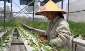 Tạo đột phá để nông nghiệp Thủ đô tăng trưởng trên 4% năm 2021