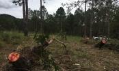 Để xảy ra các vụ phá rừng, người đứng đầu có thể bị đình chỉ công tác