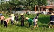 Xã Hưng Đông (TP Vinh - Nghệ An): Hơn 3 ngàn người ra quân làm thủy lợi